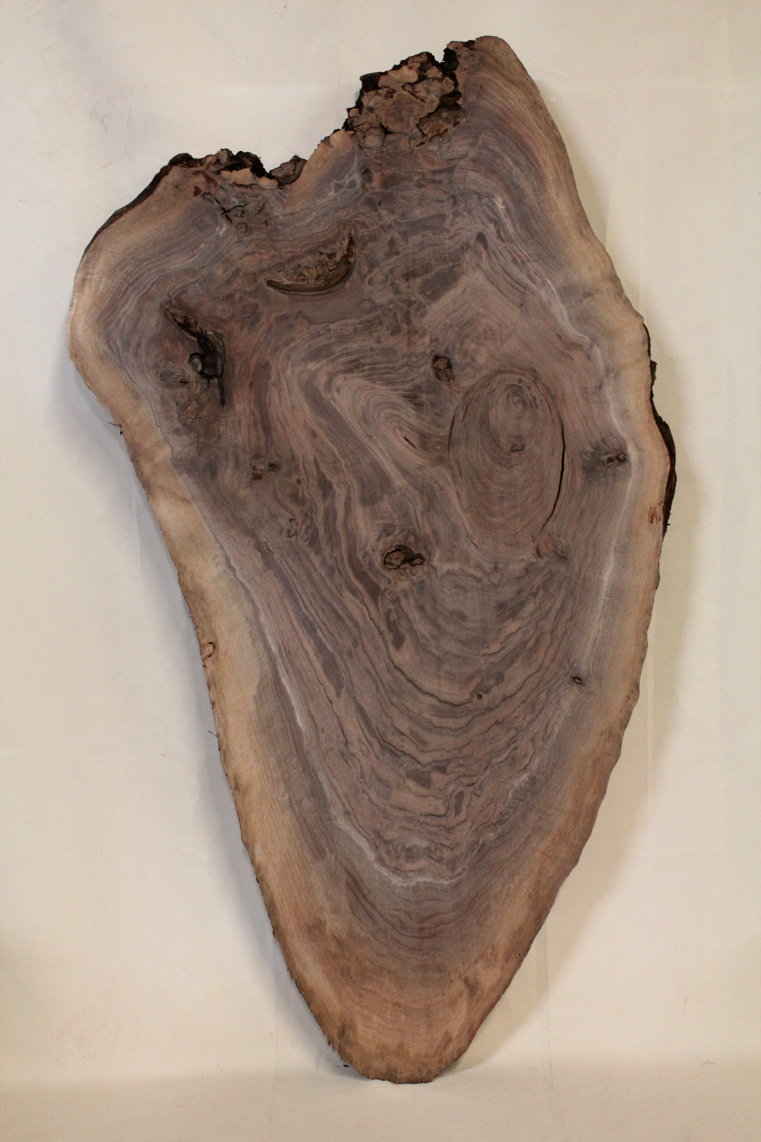 """Walnut 2   This is a heart shaped 27"""" x 51.5"""" slab of Western Black Walnut. This would make a great smaller coffee table or large end table.    See more"""