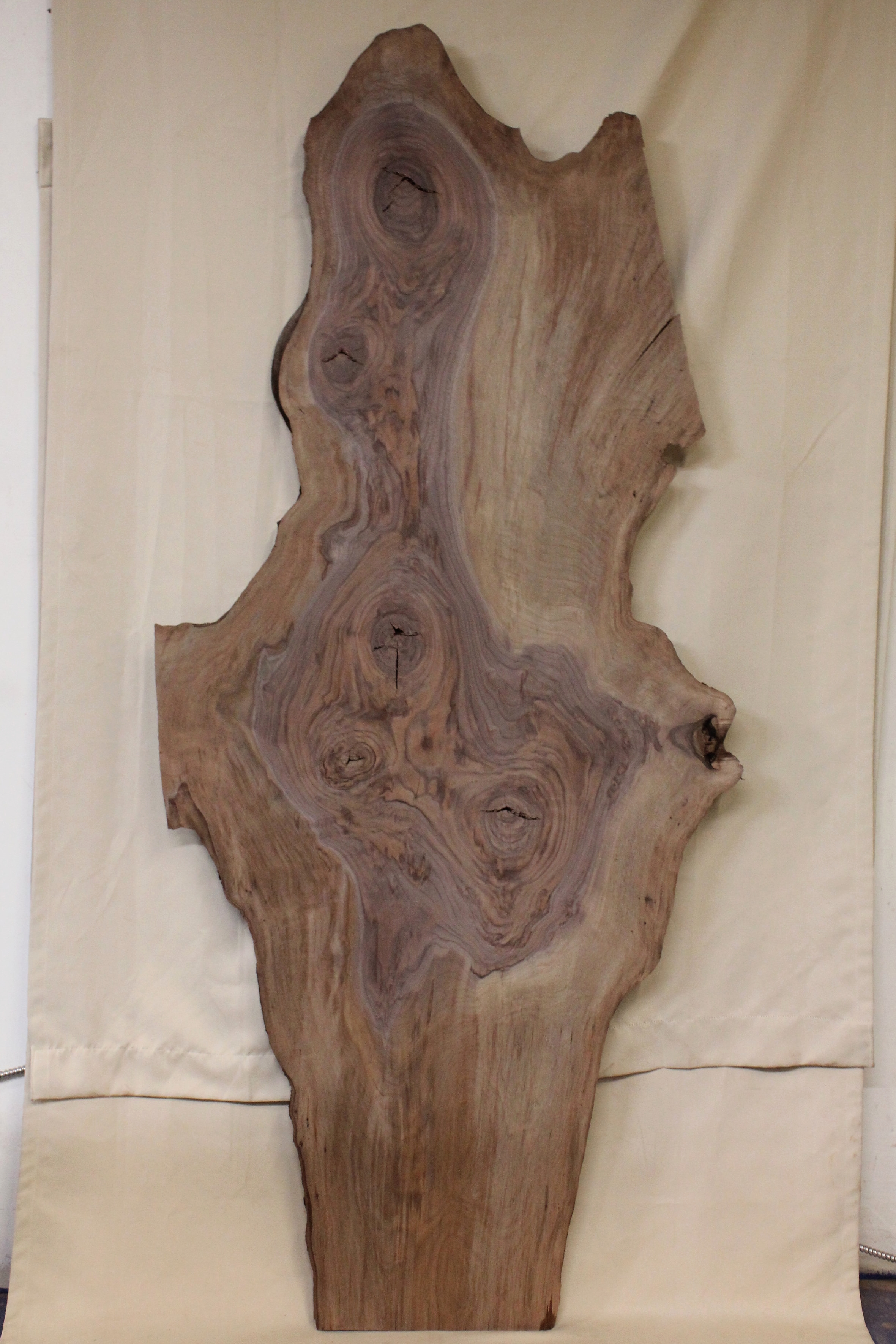 """Walnut 8   This is a wonky 32"""" x 76"""" slab of Western Black Walnut.    See more"""