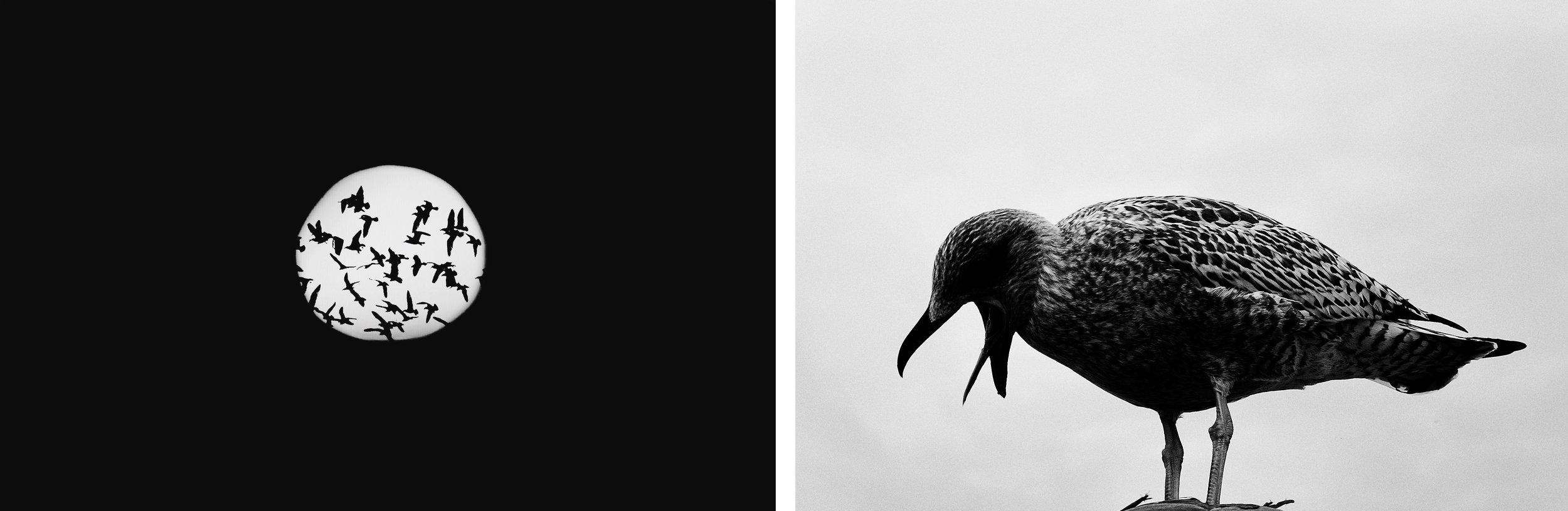 © Marijke De Schepper