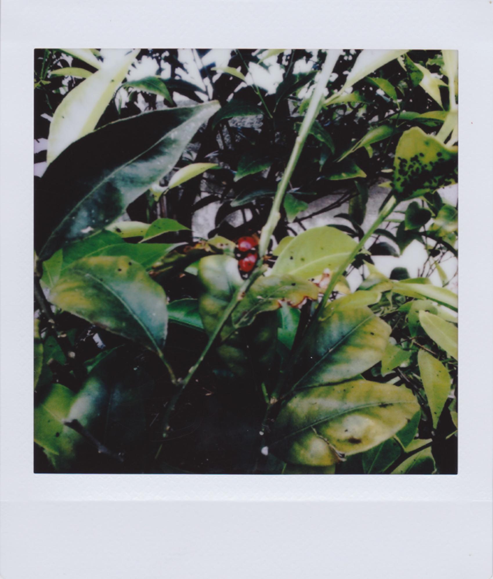 Stromboli 11.jpg
