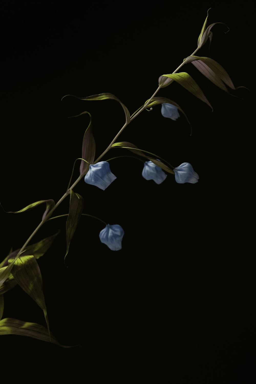 *BLUE FLOWERS.jpg