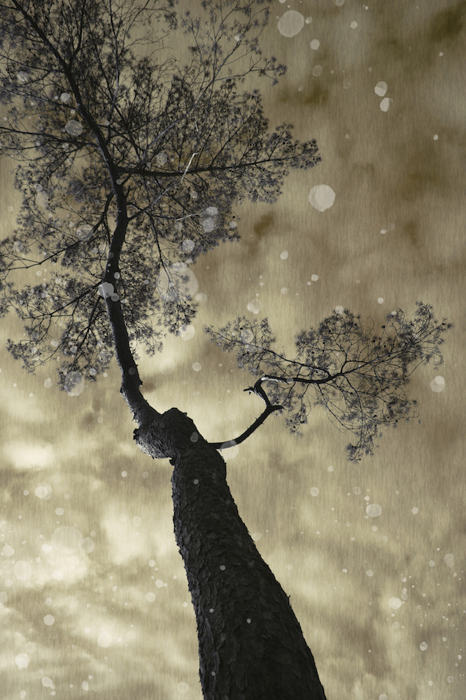 *TREE.jpg
