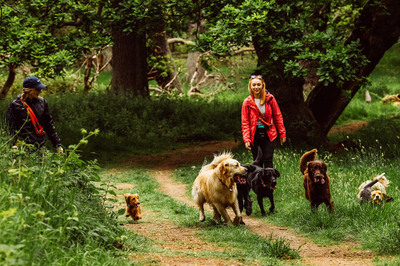 dog-walking-service-edinburgh-puppy-daycare-3.jpg