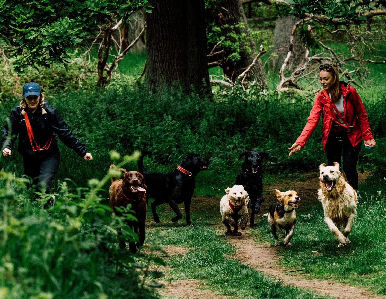dog-walking-service-edinburgh-puppy-daycare-5.jpg