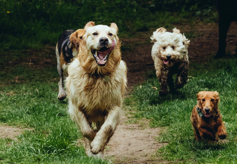 dog-walking-service-edinburgh-puppy-daycare-6.jpg