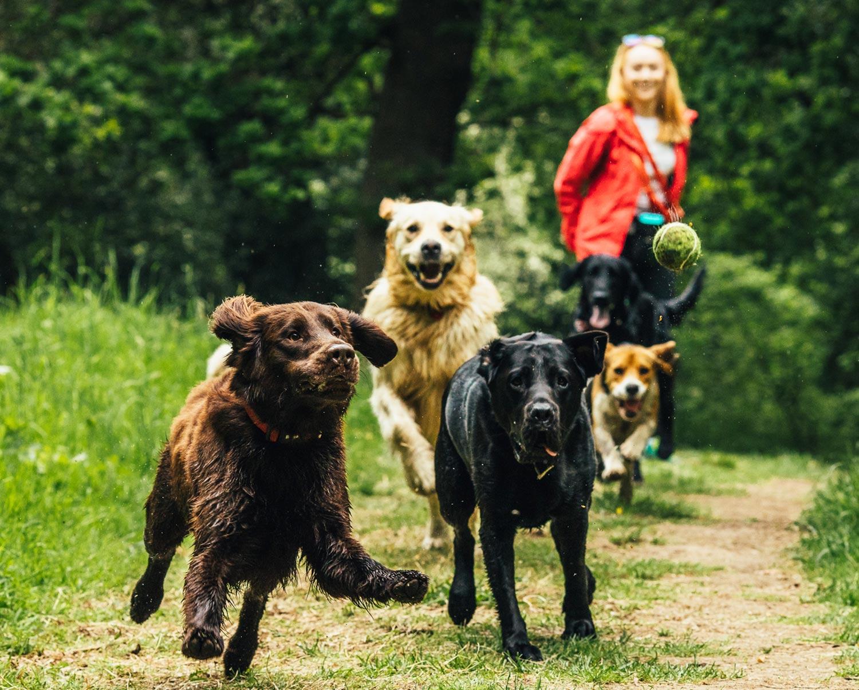 dog-walking-service-edinburgh-puppy-daycare-7.jpg