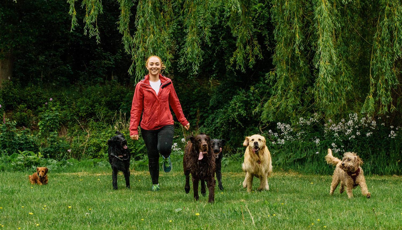 dog-walking-service-edinburgh-puppy-daycare-10.jpg