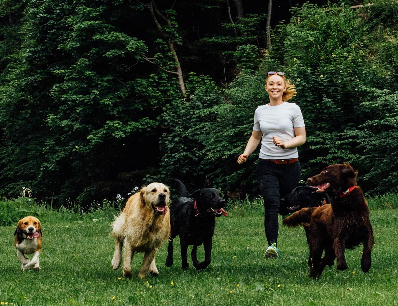 dog-walking-service-edinburgh-puppy-daycare-9.jpg