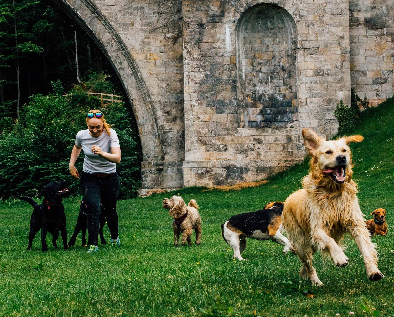 dog-walking-service-edinburgh-puppy-daycare-11.jpg
