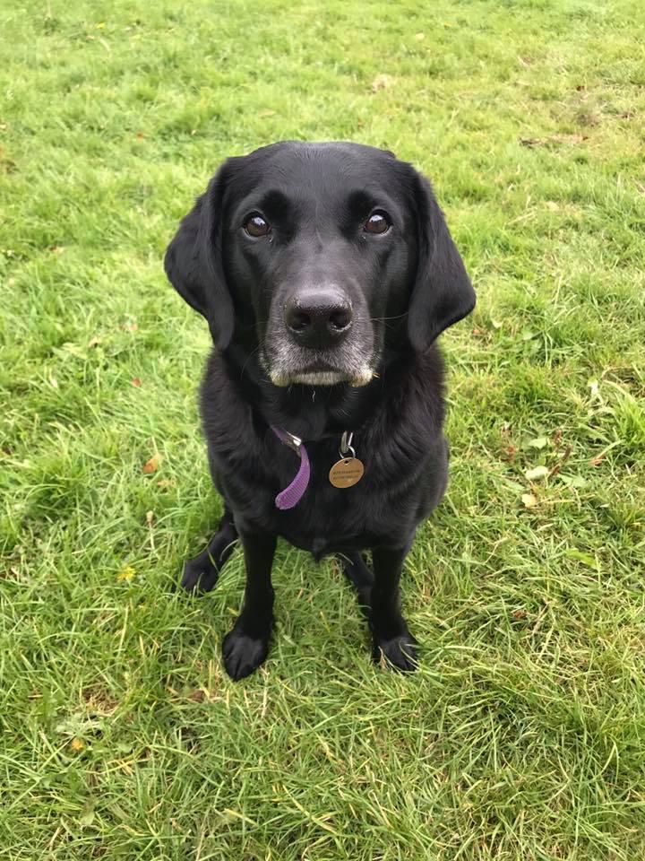 dog-walking-service-edinburgh-puppy-daycare-13.jpg