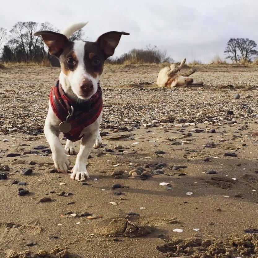 dog-walking-service-edinburgh-puppy-daycare-14.jpg