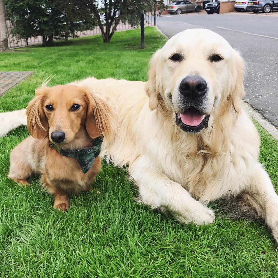 Bailey&Walter.jpg