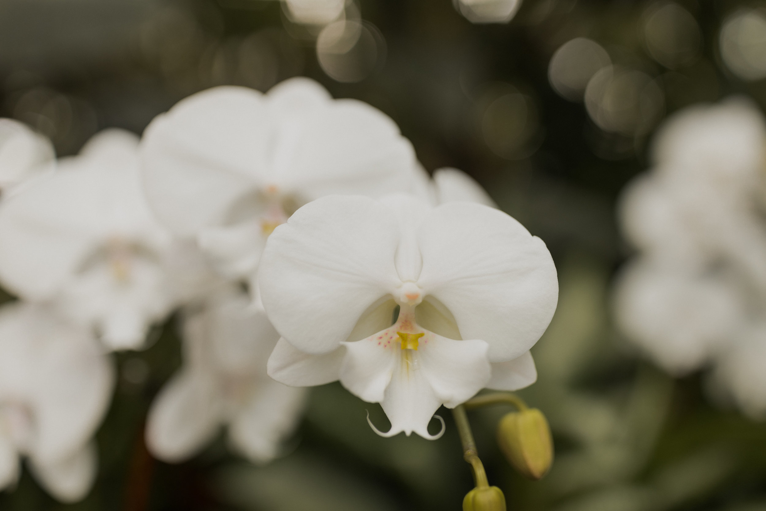 orchidss!