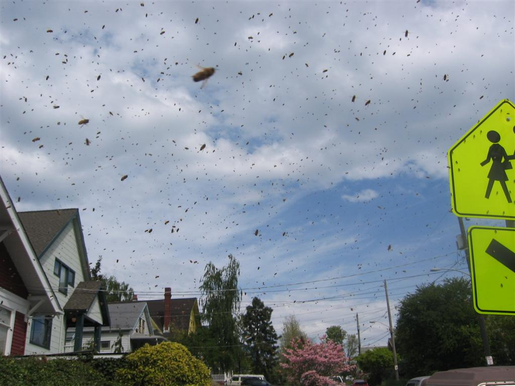Swarm in the air