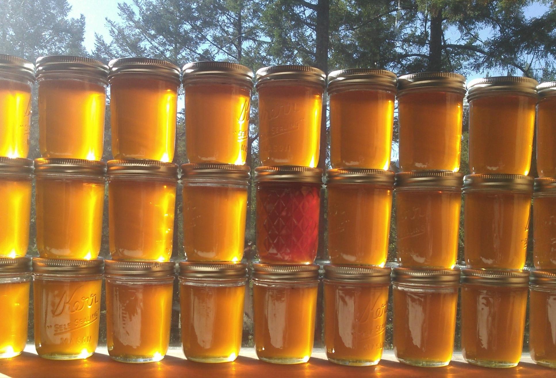 Harvested honey