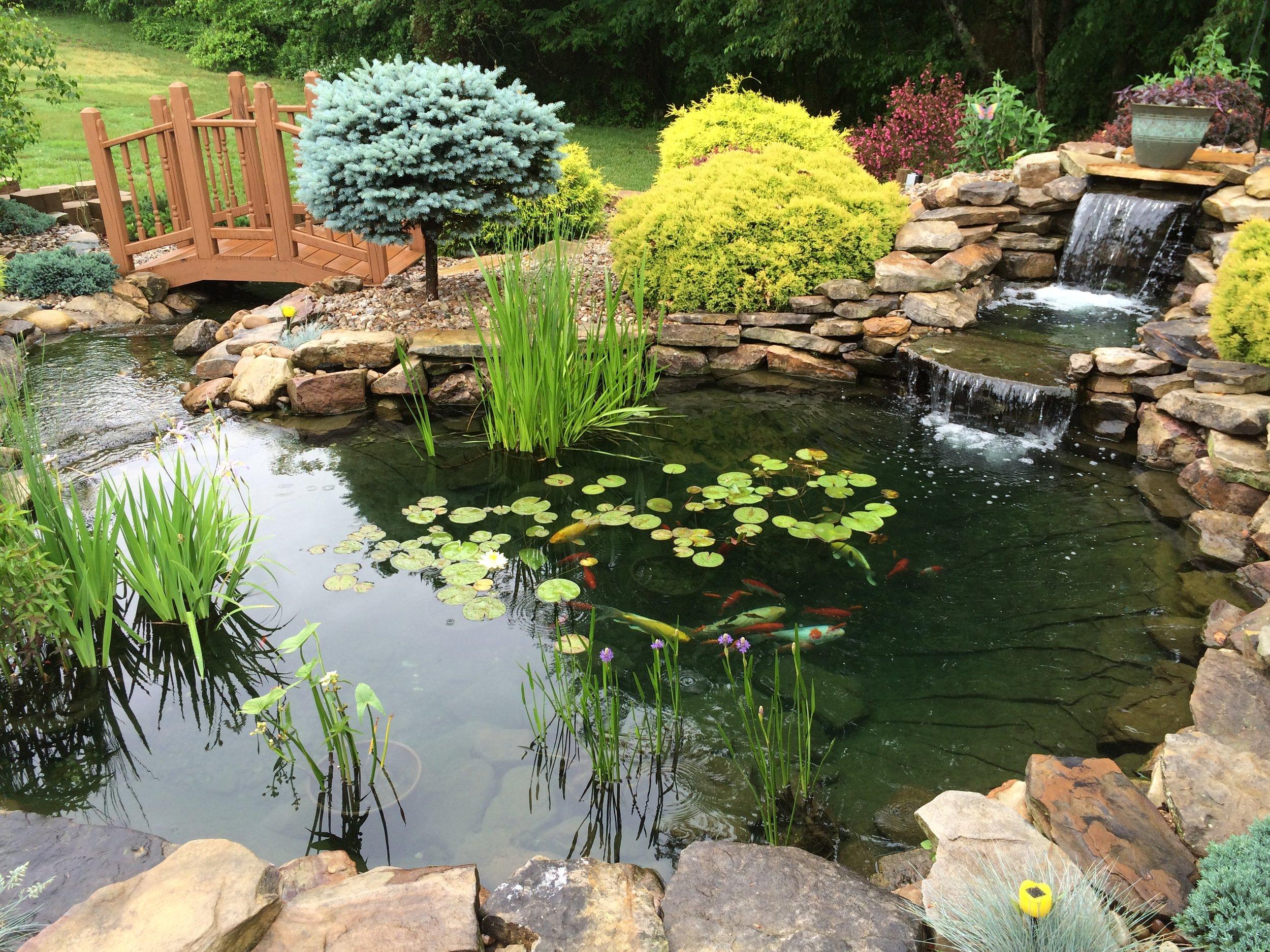 - Ponds & Garden Photos