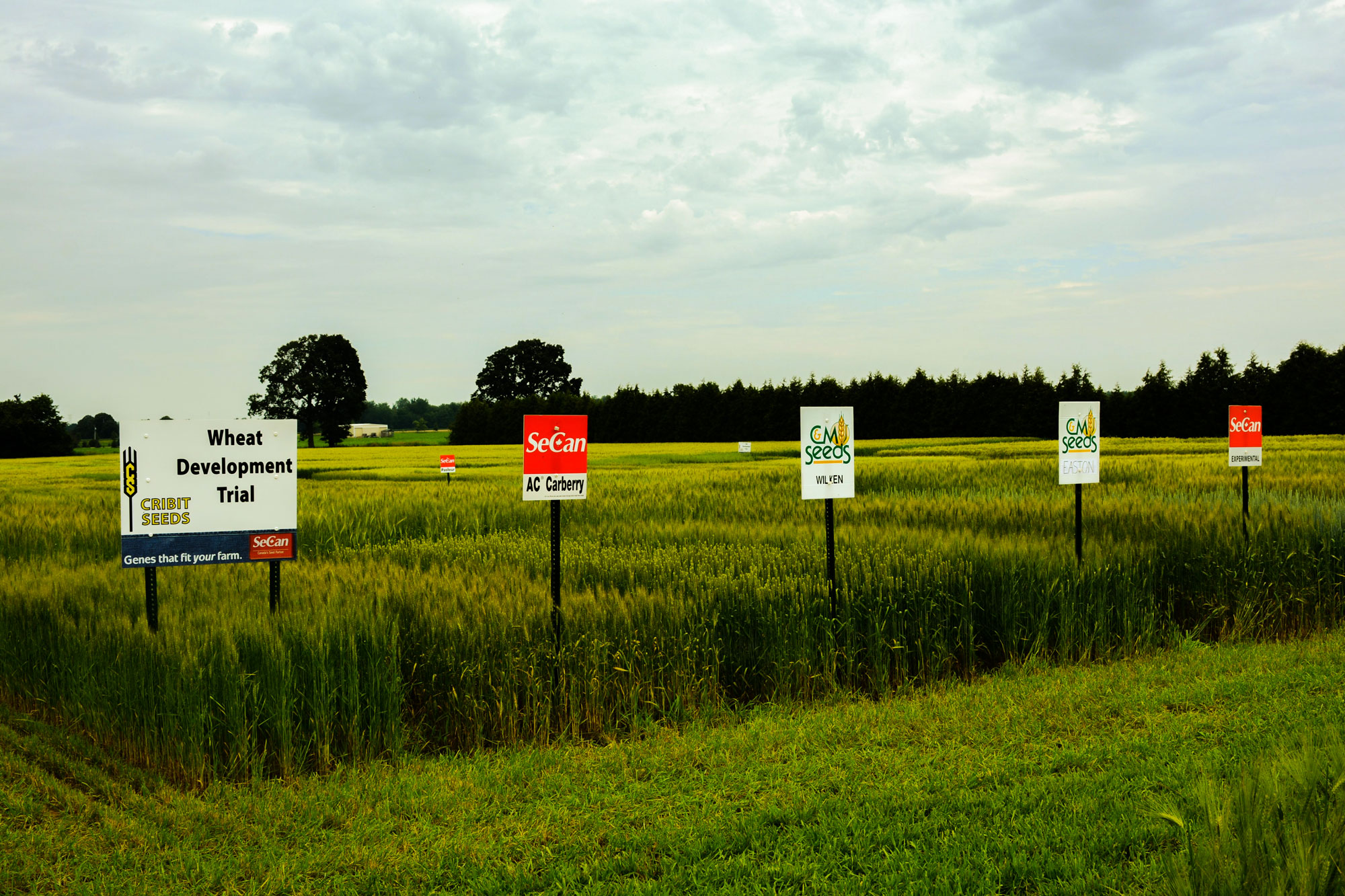 EXPERTS IN YOUR FIELDS - Our field success is your field success. Regional differences can have a huge impact on your farm's growing potential and success; our strength is providing locally tested varieties that perform well on your farm.LEARN MORE ABOUT OUR SEED VARIETIES