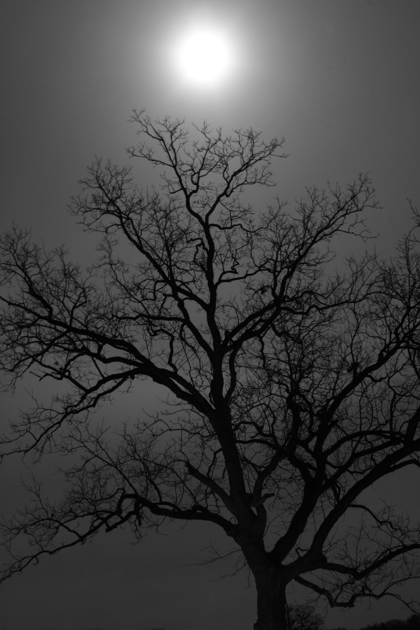 Moon Over Tree- East Texas