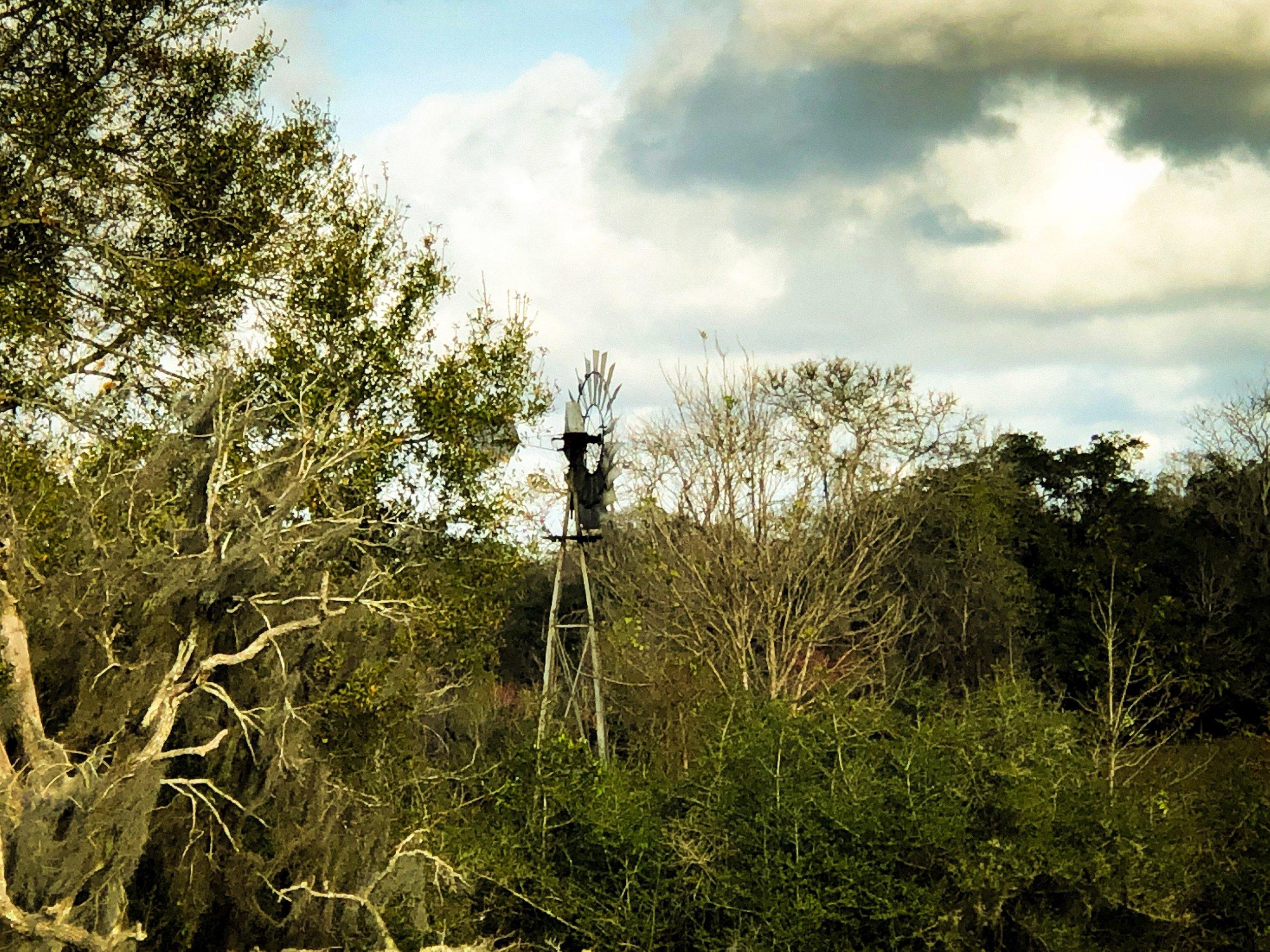 Windmill Among Live Oaks by Adam Graser.JPEG