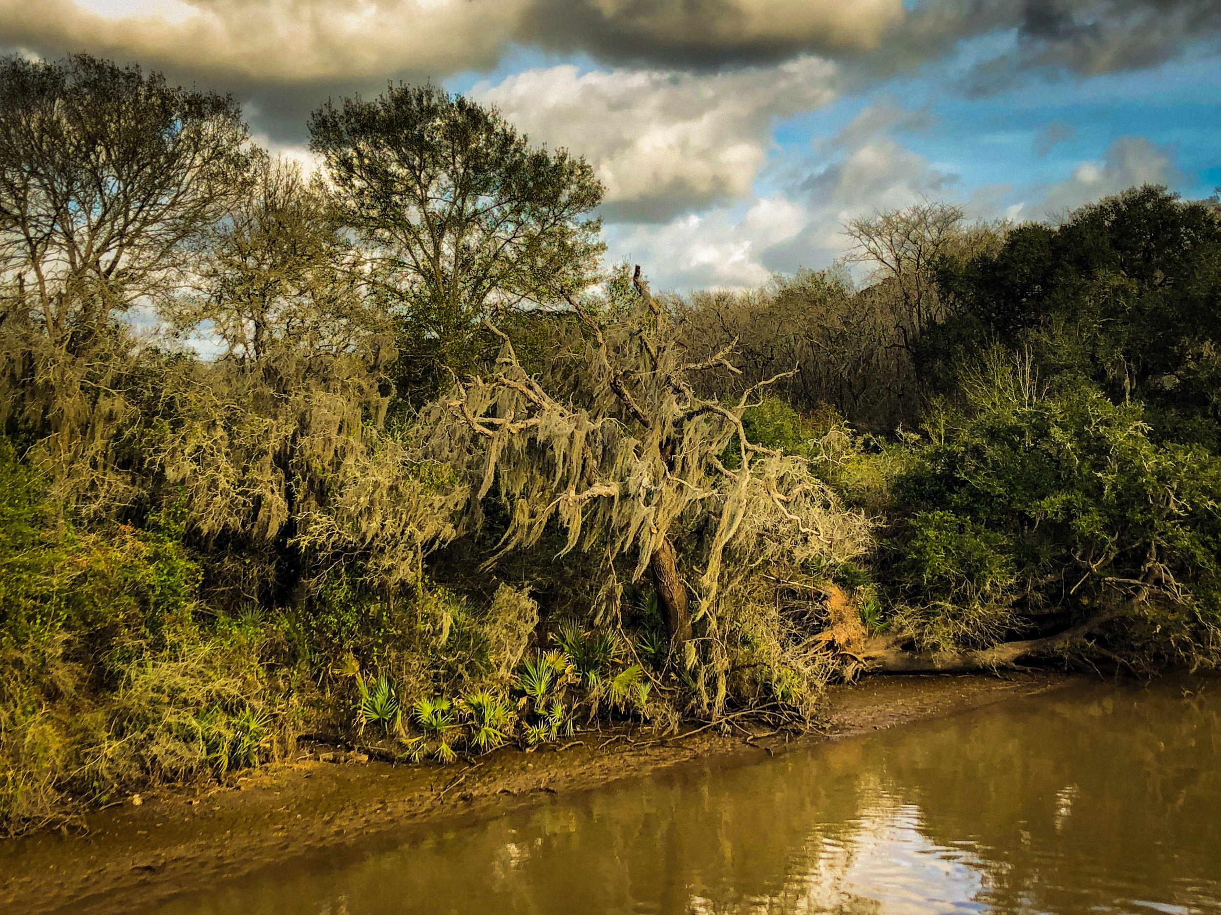 Live Oaks Along The RIver by Adam Graser Photography.JPEG