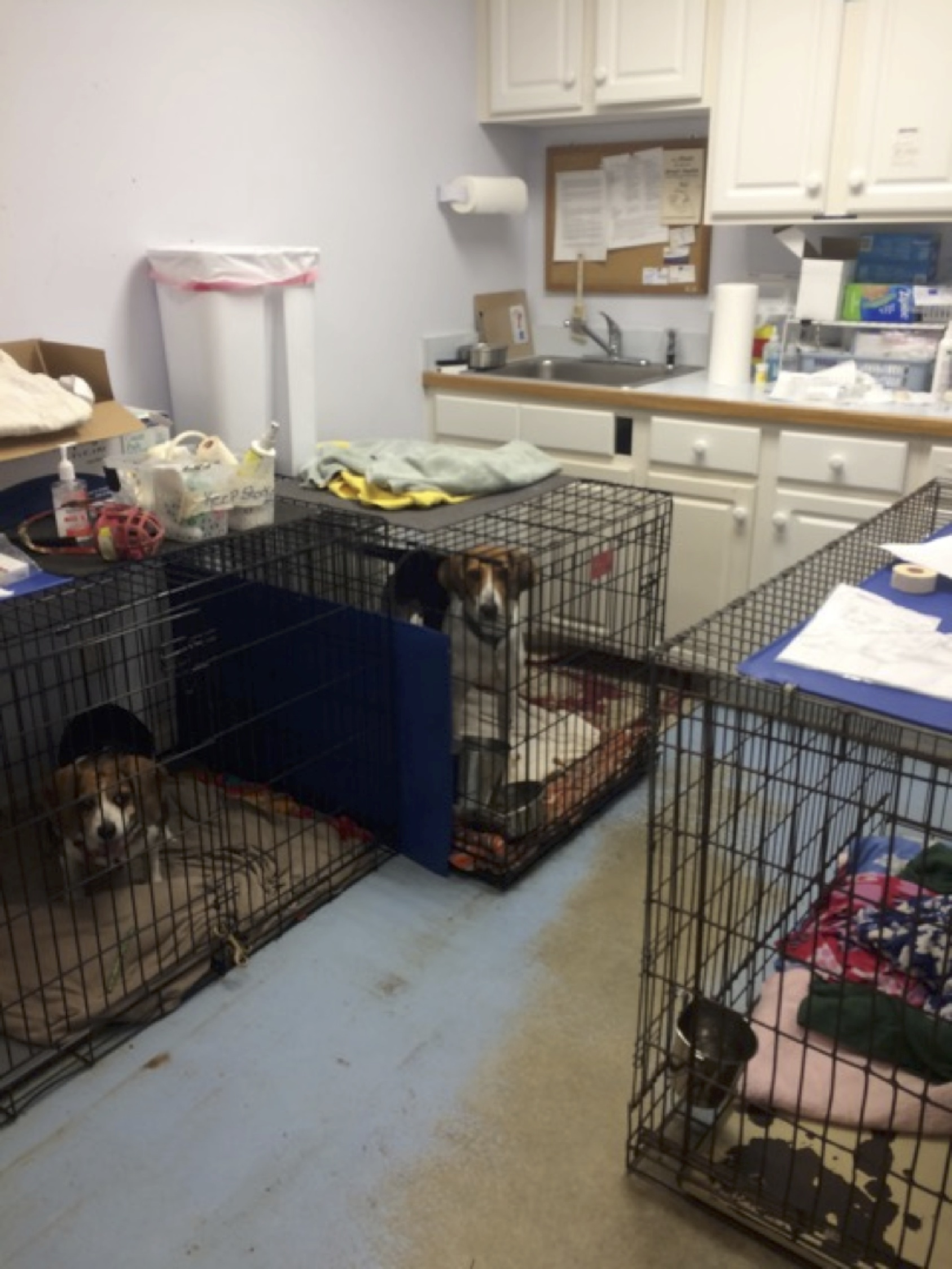 Greyhound Friends: Recovery room