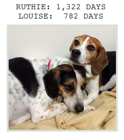 Ruthie & Louise at Greyhound Friends