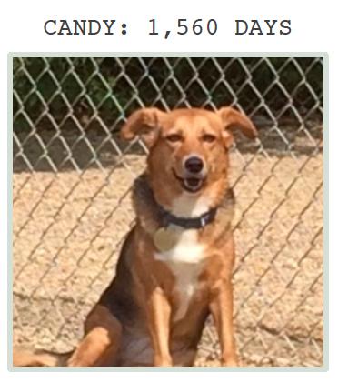 Candy at Greyhound Friends