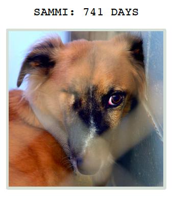 Sammi at Greyhound Friends