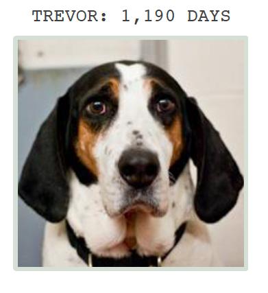 Trevor at Greyhound Friends