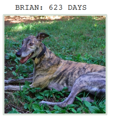 Brian at Greyhound Friends