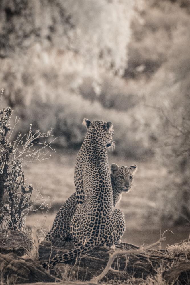 TerriGold_Kenya-12.jpg