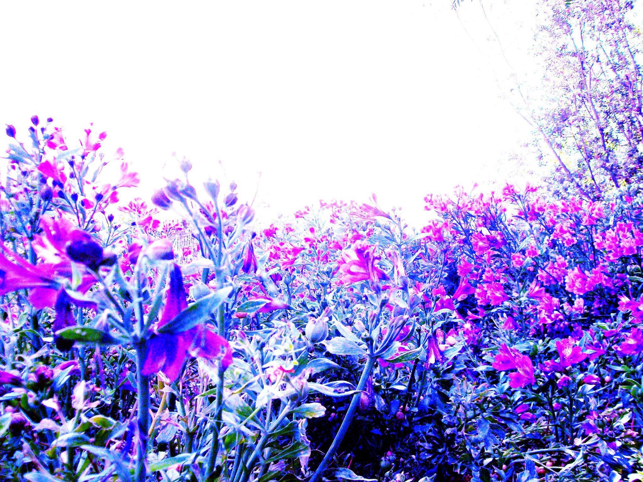 intheflowers.jpg