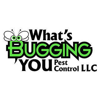What's Bugging You | RelyOn
