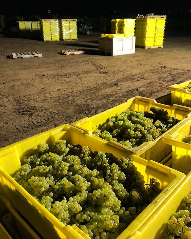 HARVEST 🍇 2018 . . . . #EscolleVineyard #slh #santaluciahighlands #vineyards #chardonnay #pinotnoir #Escolle #vineyard #winetour #wines #wine #cawine #californiawine #winemakers #winelovers #winelover #winery #wineries #centralcoastwine #growerproducer #farmerfizz #popbottles
