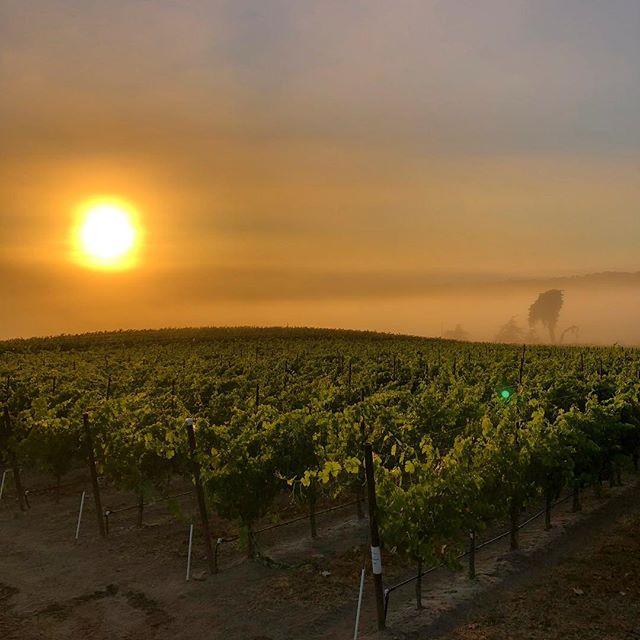 Good morning Salinas Valley . . . . . #EscolleVineyard #slh #santaluciahighlands #vineyards #chardonnay #pinotnoir #Escolle #vineyard #winetour #wines #wine #cawine #californiawine #winemakers #winelovers #winelover #winery #wineries #centralcoastwine #growerproducer #farmerfizz #popbottles