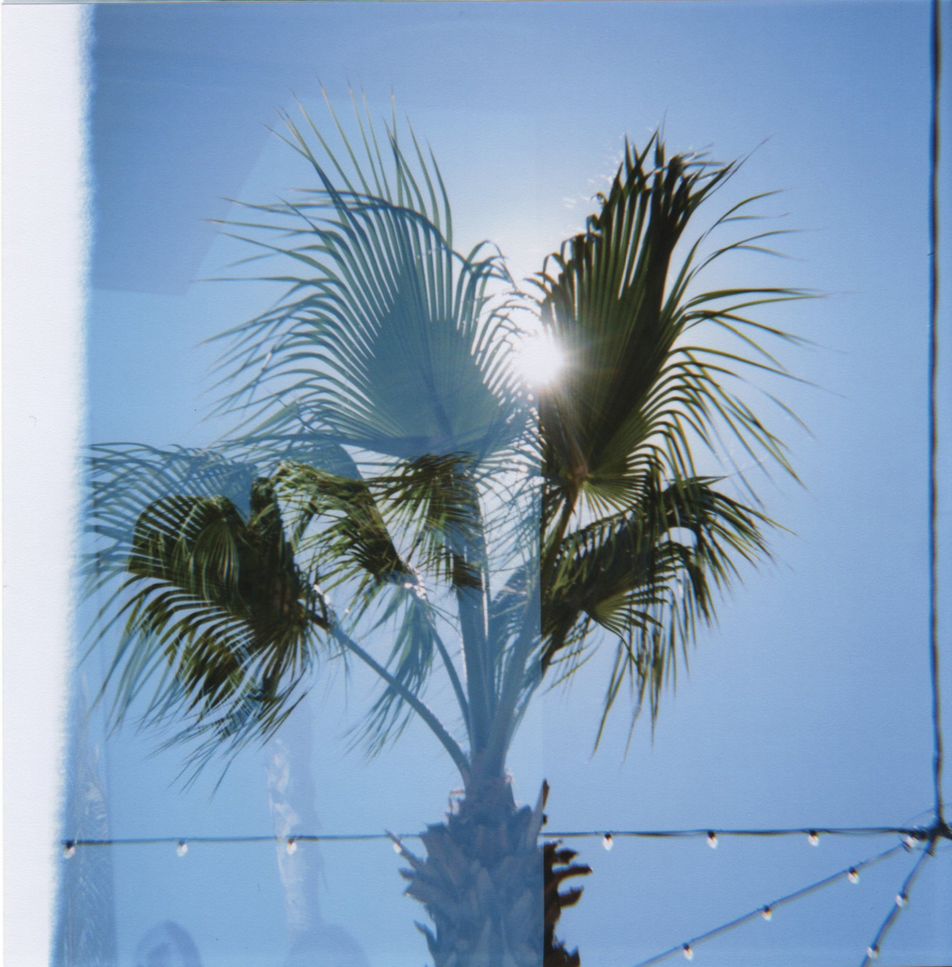 LA_doublepalm.jpg