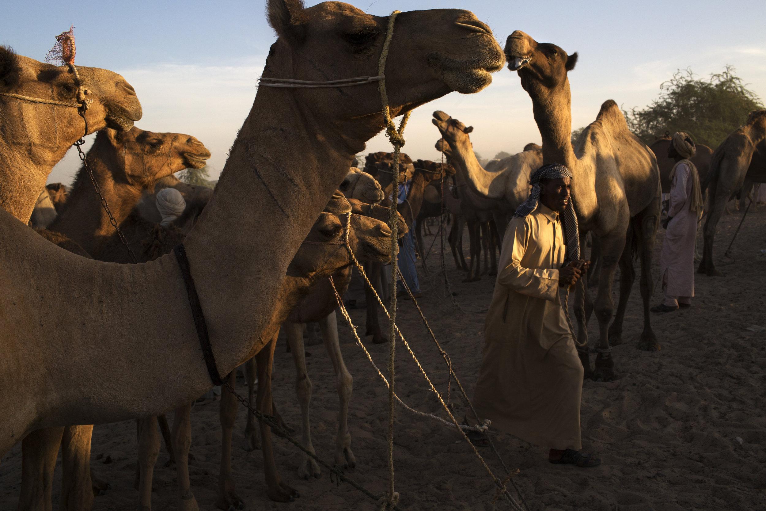 DWF_UNICEF_CHAD_005.JPG