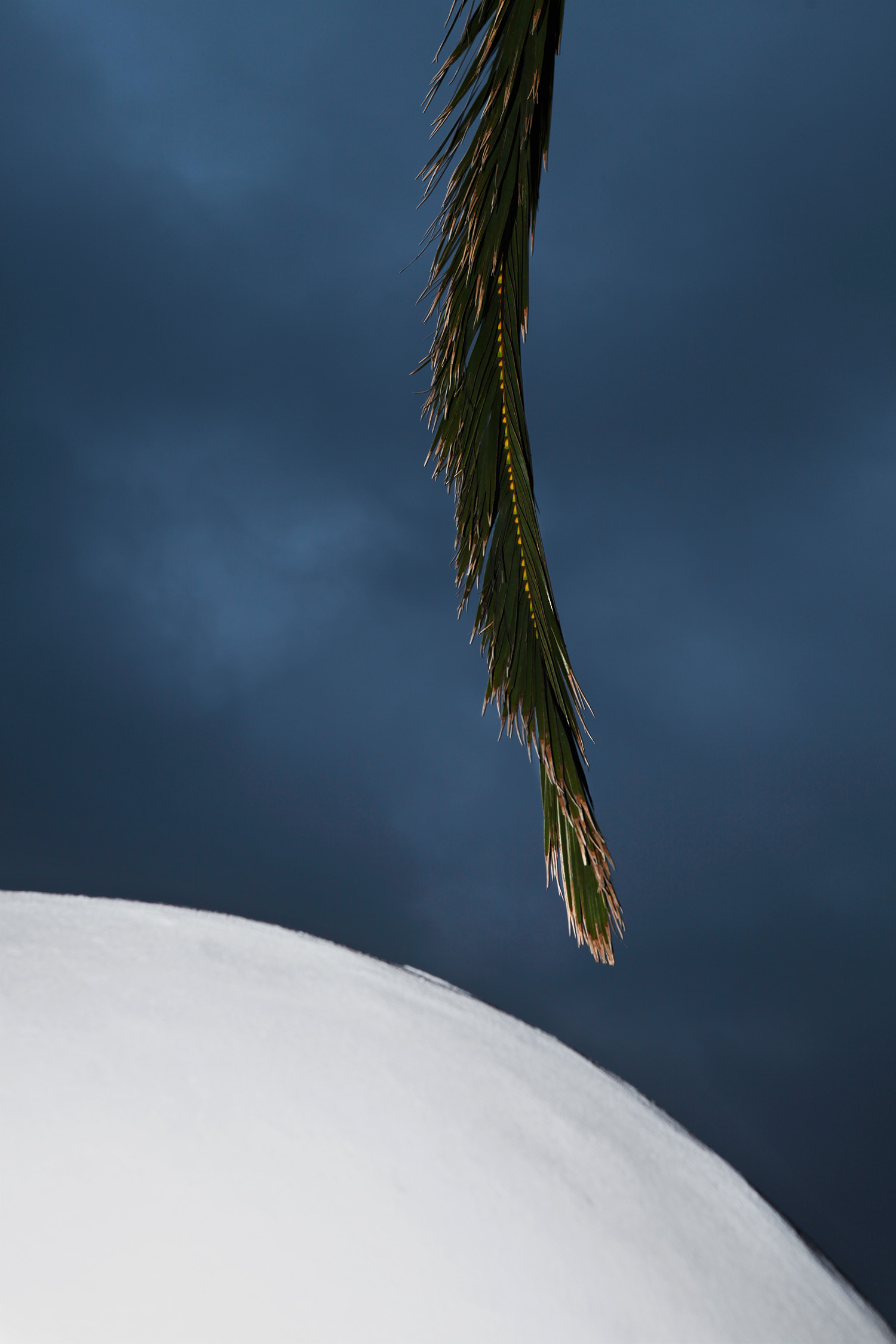 Justine Guerriat Microcosm series Moon Palm
