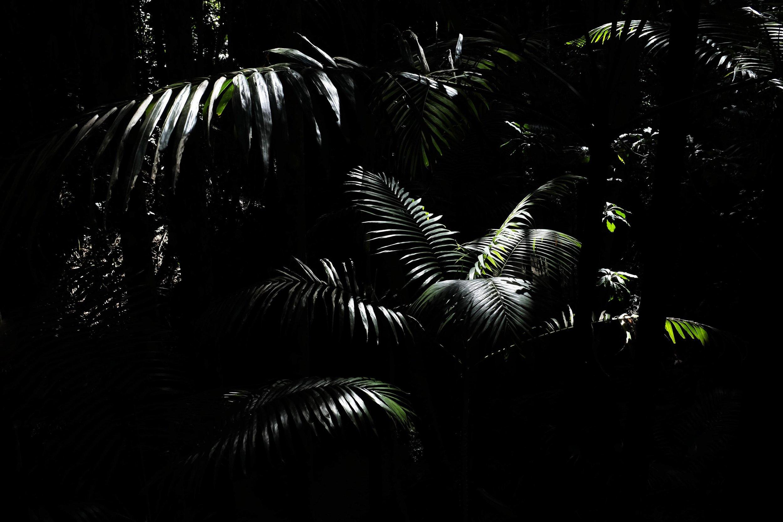 From the series  Herbarium , Fraser Island, Australia, 2016