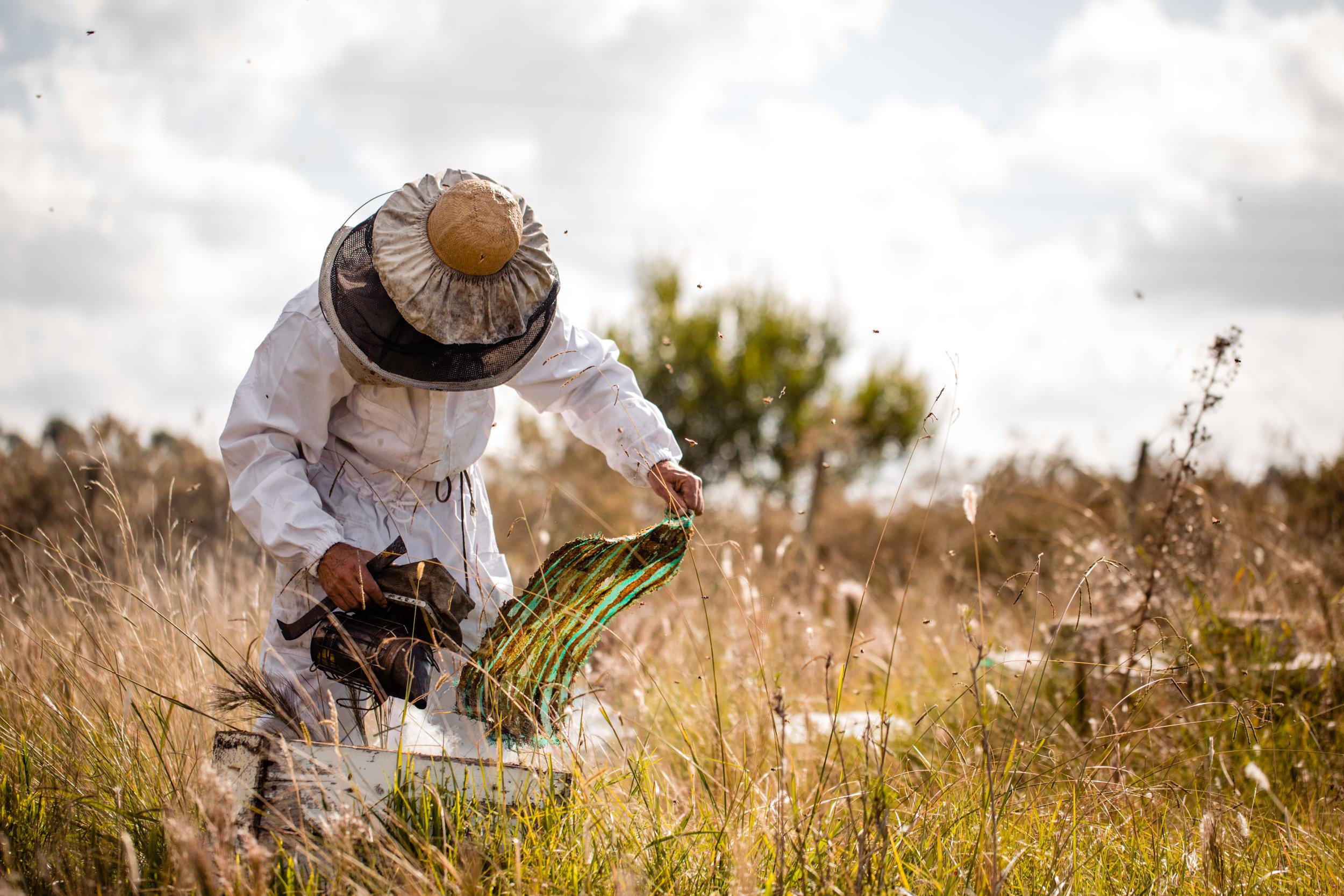 un DÍA de apicultura -