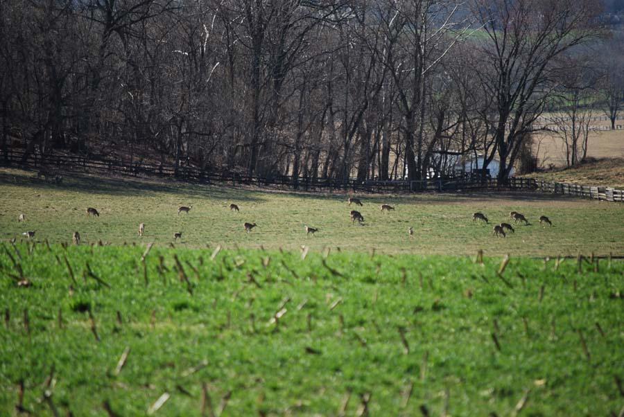 080317-Field-of-deer-wild-sm.jpg