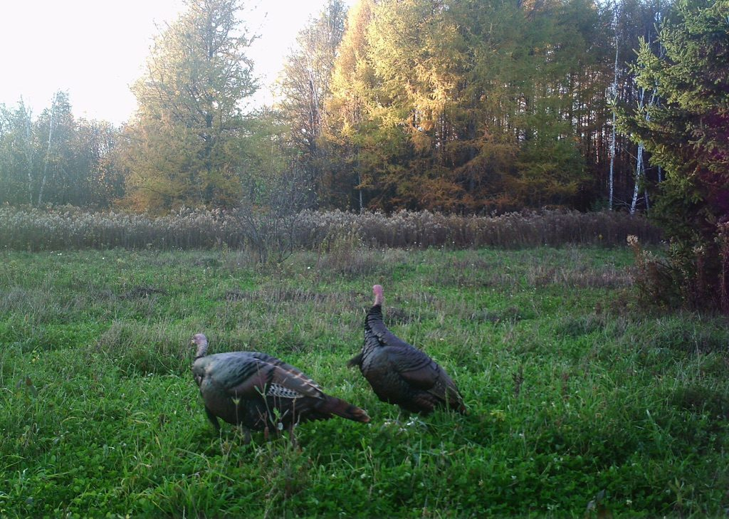 fall-turkey-hunting-from-a-tree-stand-pic-2-e1479929311290.jpg