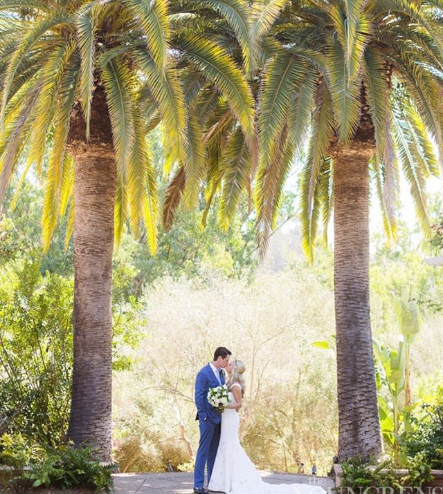 Glorious palm trees framing the bride and groom - with the California sunshine bathing them in golden light ☀️ @theyoungrens @ranchovalencia @thejaxfitz