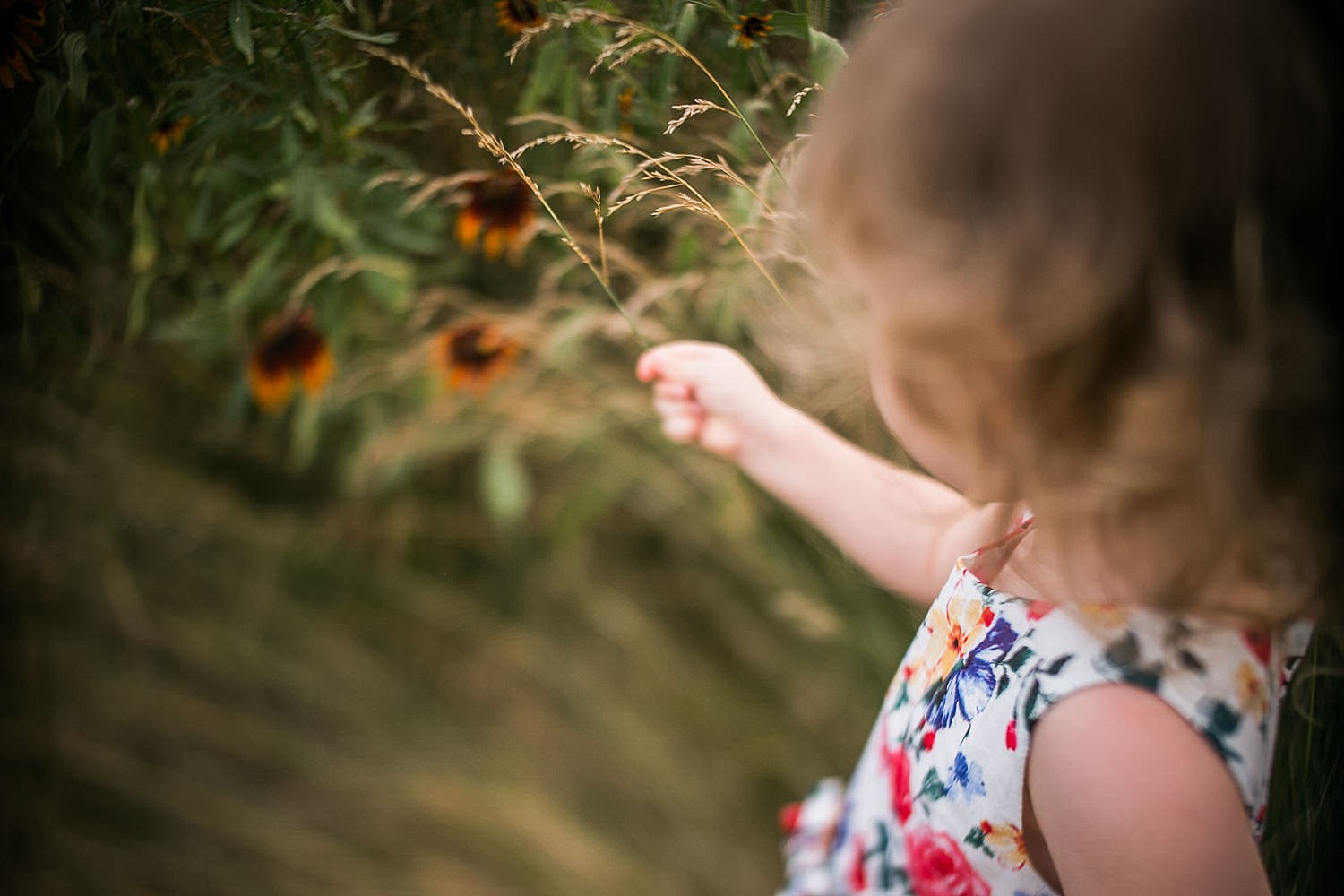 Lititz_family_photographer_wildflower_field-20.jpg
