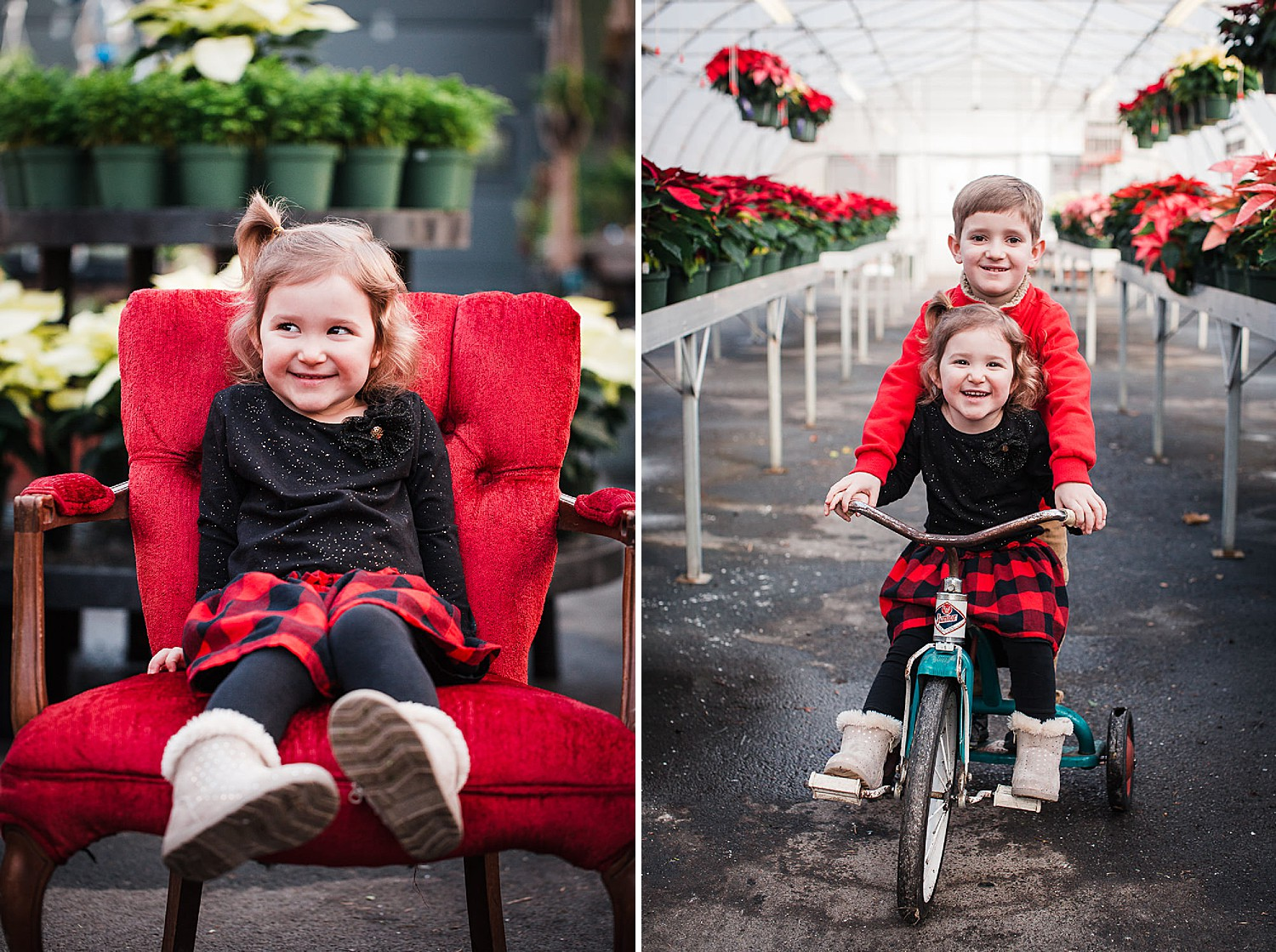 Photo of a little boy and girl riding on a vintage tricycle in a greenhouse full of poinsettias at Christmas time.