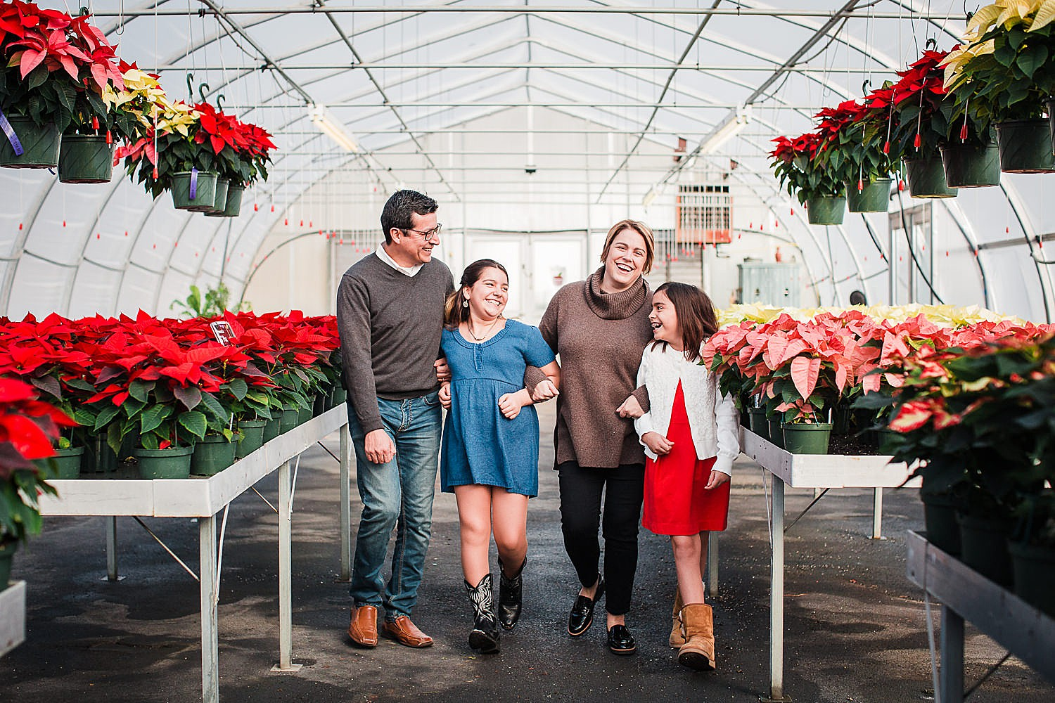 Photo of a family of four walking through a greenhouse full of poinsettias at Christmas time.