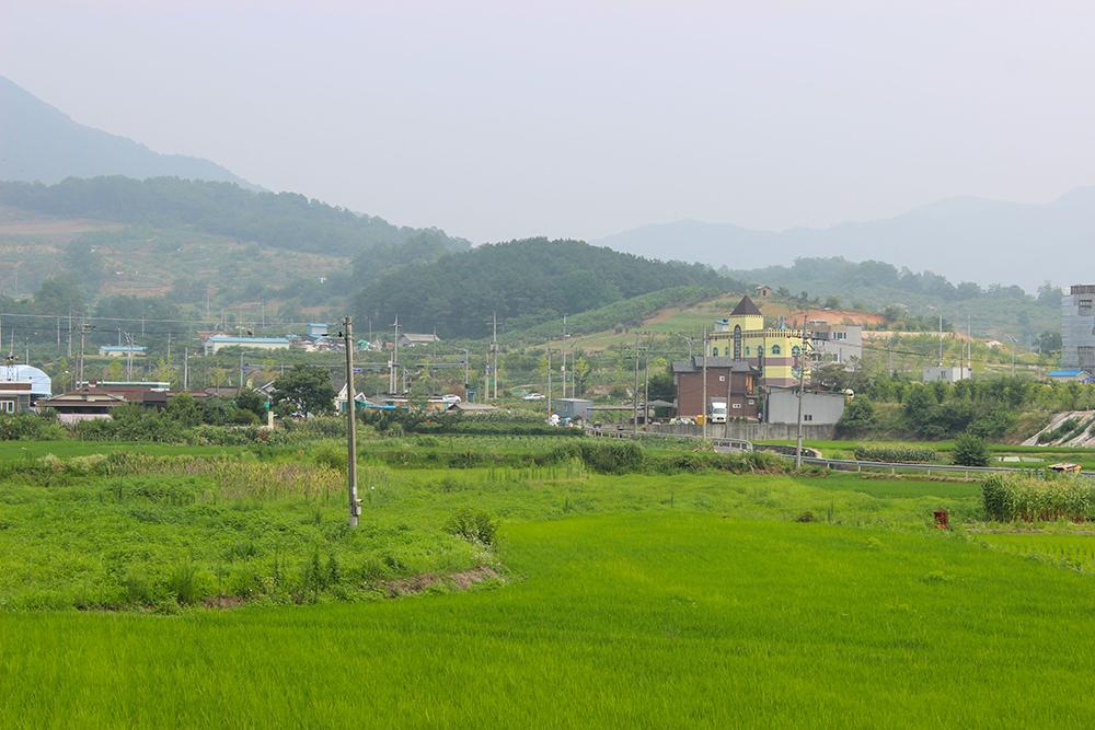 Rice-paddies-2.jpg