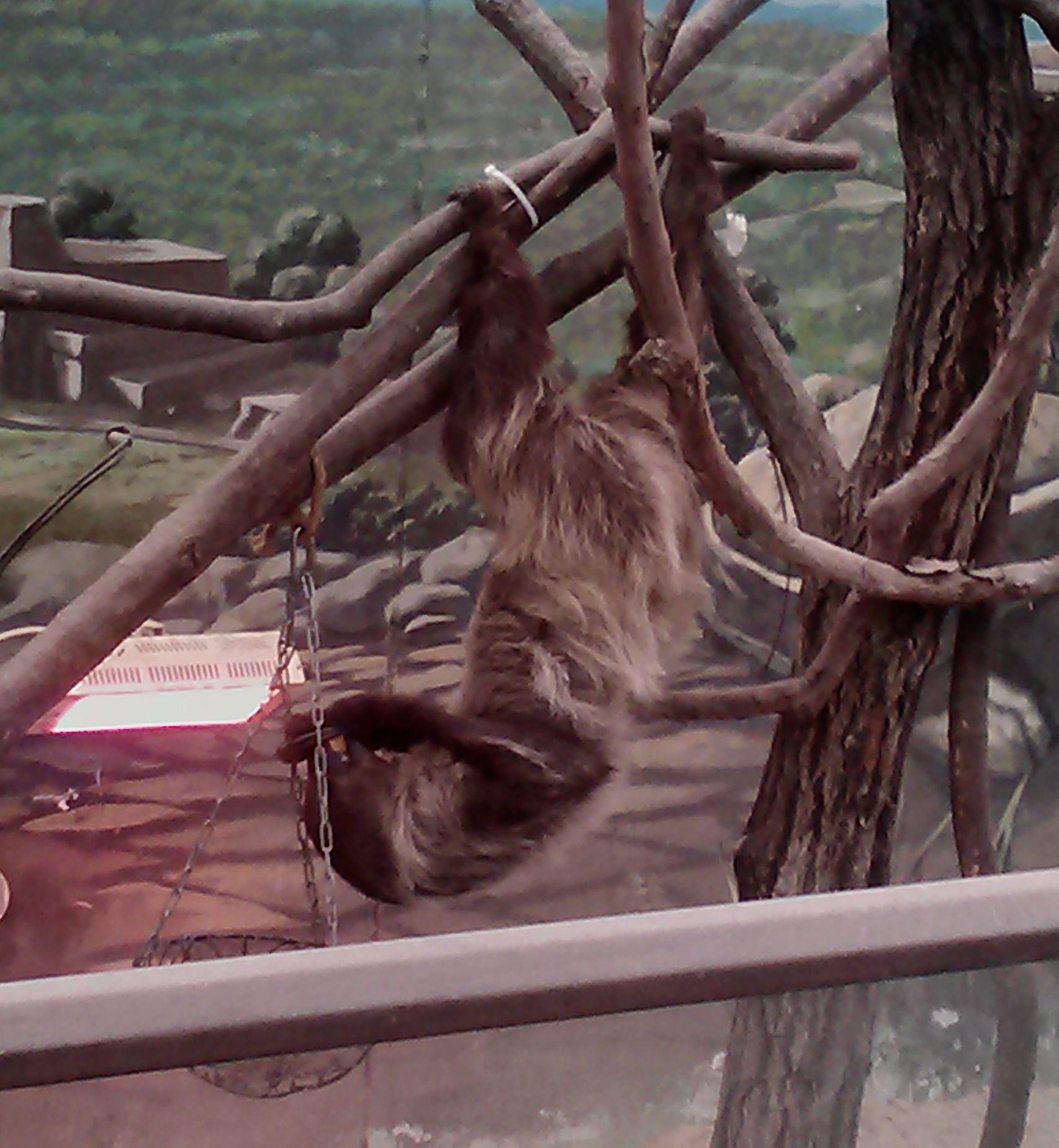 Eating-Sloth-2.jpg