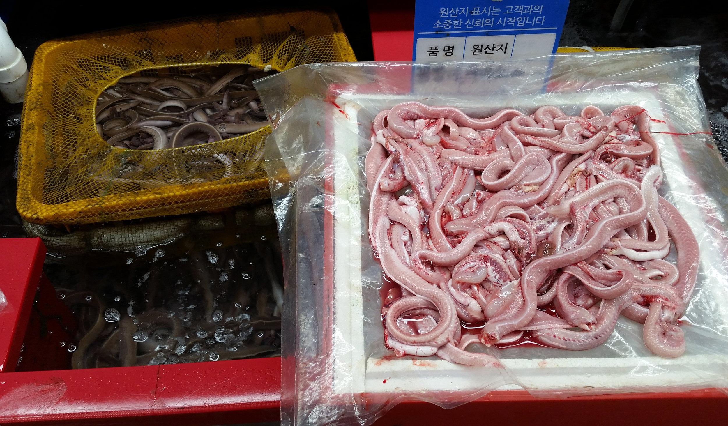 Eels OK.jpg