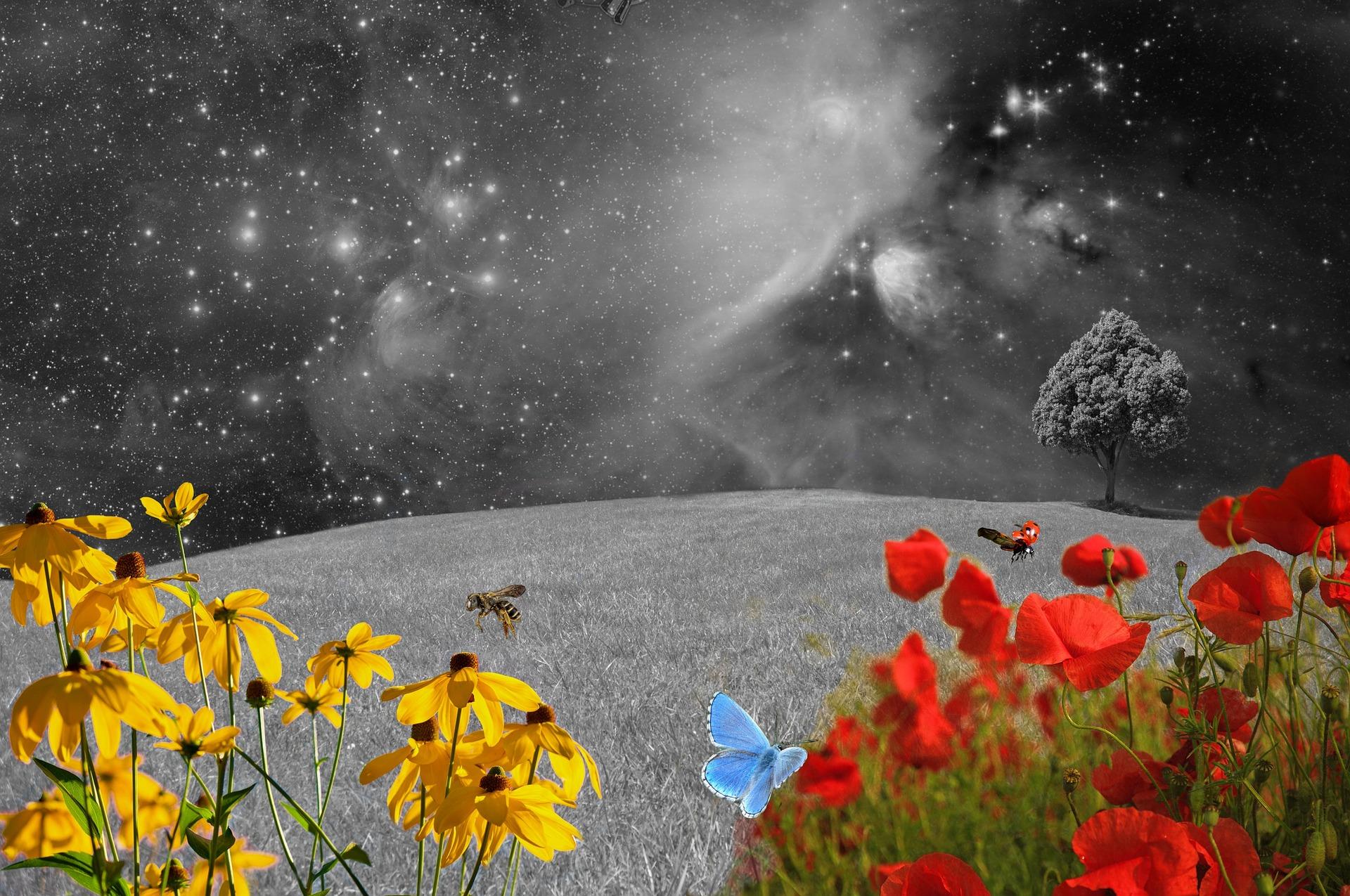 meadow-2401893_1920.jpg